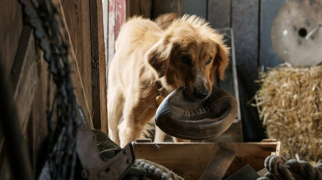 a_dogs_purpose_courtesy_universal_pictures.jpe