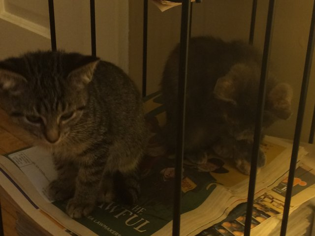 cats_reading_indy.jpe