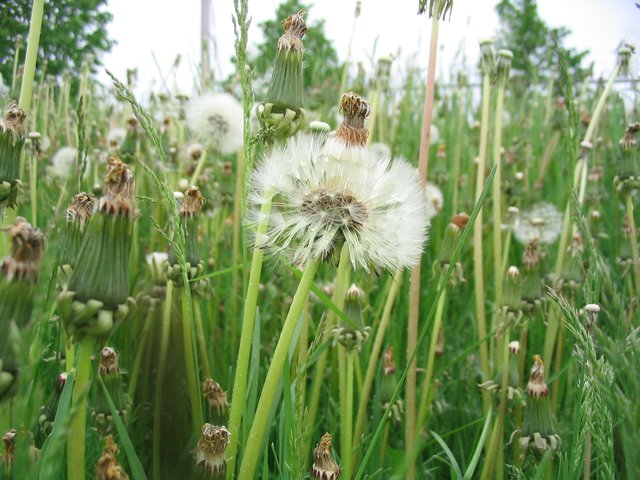 weeds_in_waterloo_ontario.jpe
