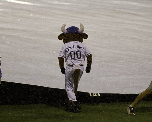 Wool E. Bull surveys the situation during the rain delay.