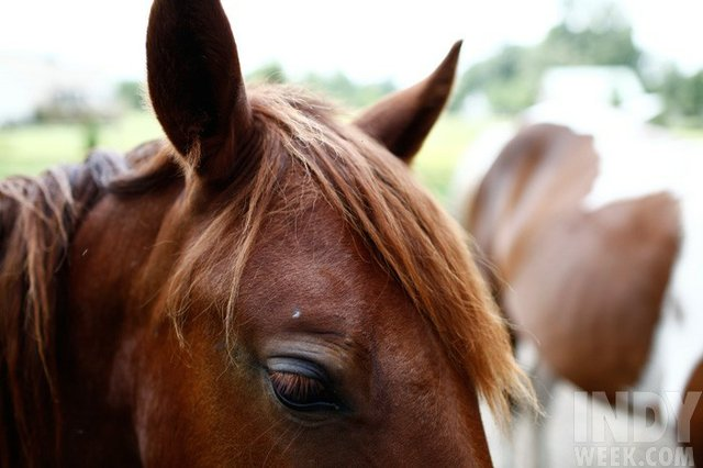 28_triangle_horse_rescue_023_dla.jpe
