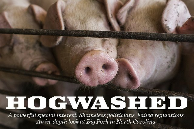 hogwashed.jpe