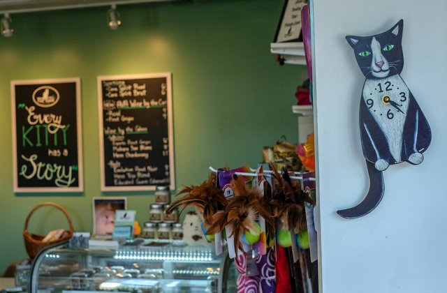 cat-tales-triangles-first-cat-cafe-shop.jpg