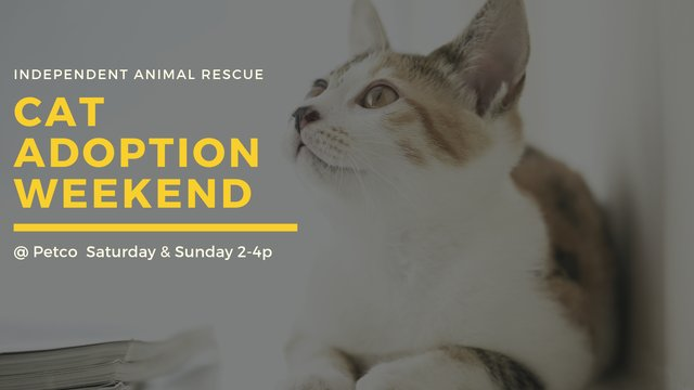 Cat Adoption Weekend.png