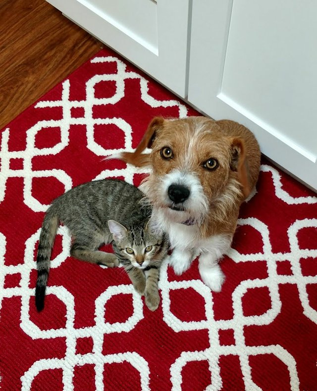 8.7_pets-contest_finalist_Gary-and-Willis.jpg